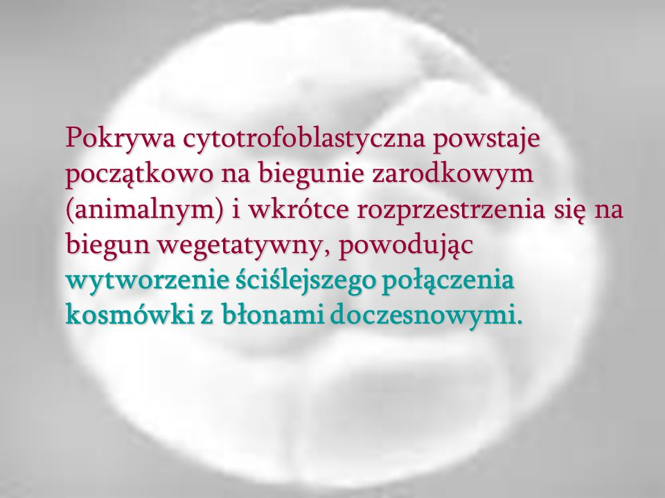 Pokrywa cytotrofoblastyczna powstaje początkowo na biegunie zarodkowym (animalnym) i wkrótce rozprzestrzenia się na biegun wegetatywny, powodując wytw