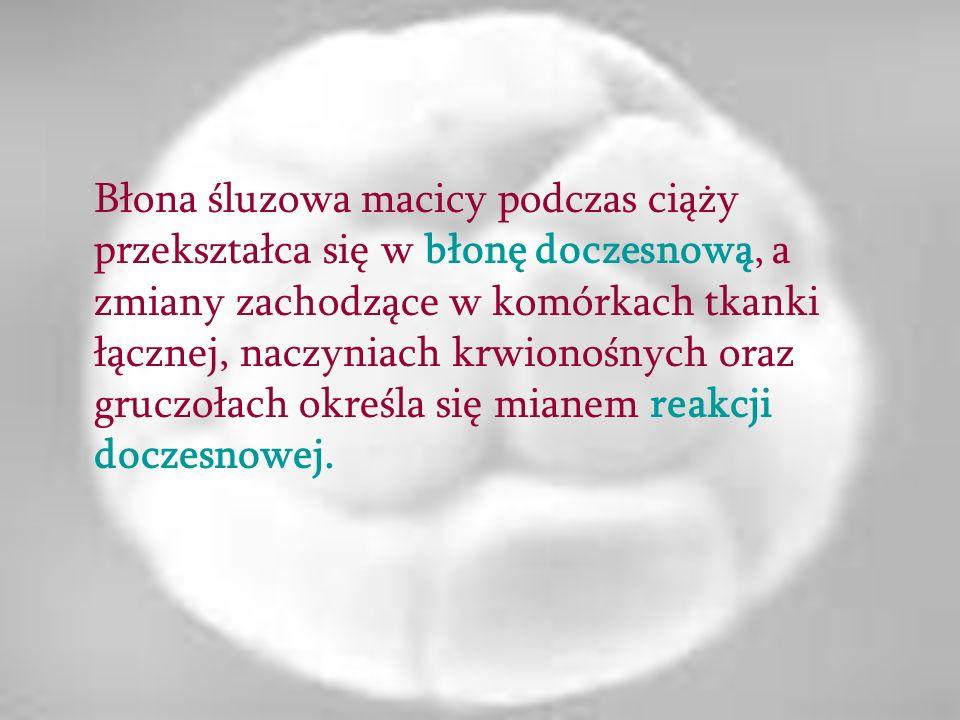 Błona śluzowa macicy podczas ciąży przekształca się w błonę doczesnową, a zmiany zachodzące w komórkach tkanki łącznej, naczyniach krwionośnych oraz g