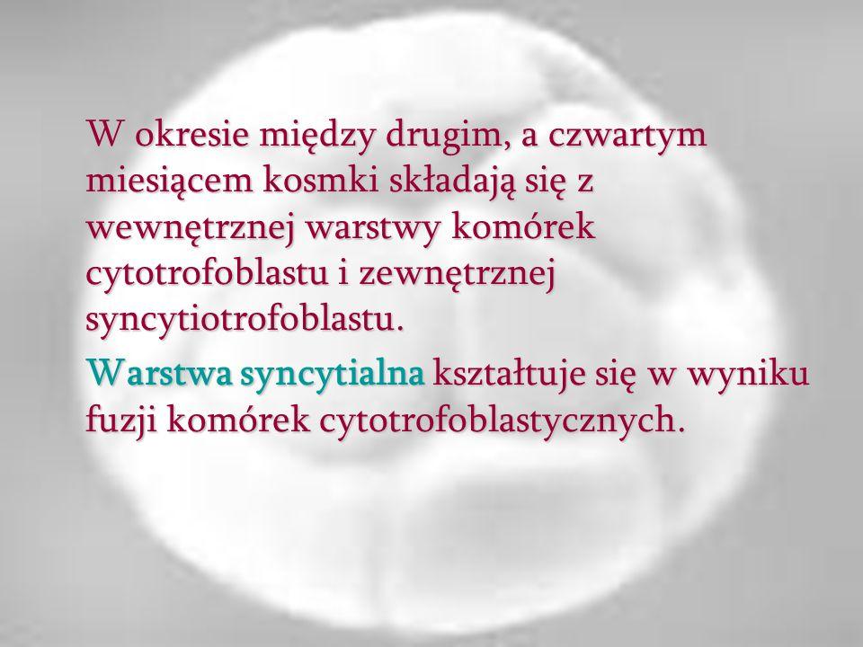 W okresie między drugim, a czwartym miesiącem kosmki składają się z wewnętrznej warstwy komórek cytotrofoblastu i zewnętrznej syncytiotrofoblastu. War