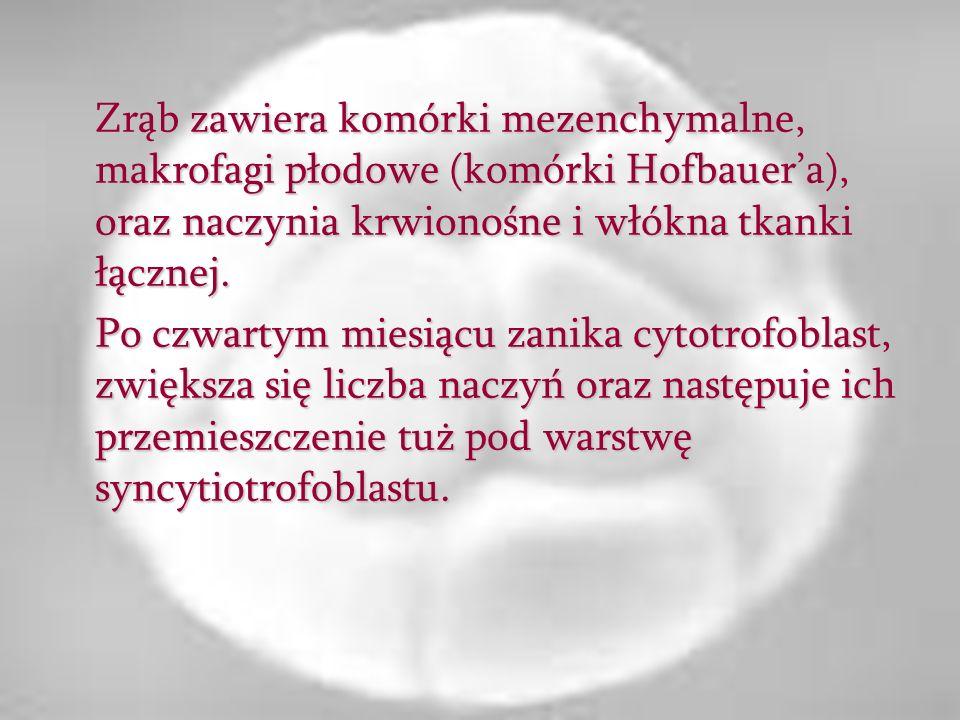 Zrąb zawiera komórki mezenchymalne, makrofagi płodowe (komórki Hofbauera), oraz naczynia krwionośne i włókna tkanki łącznej. Po czwartym miesiącu zani