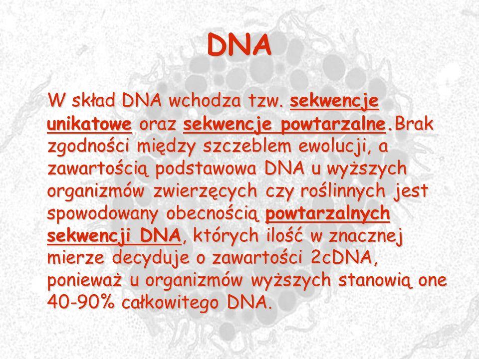 DNA W skład DNA wchodza tzw. sekwencje unikatowe oraz sekwencje powtarzalne.Brak zgodności między szczeblem ewolucji, a zawartością podstawowa DNA u w