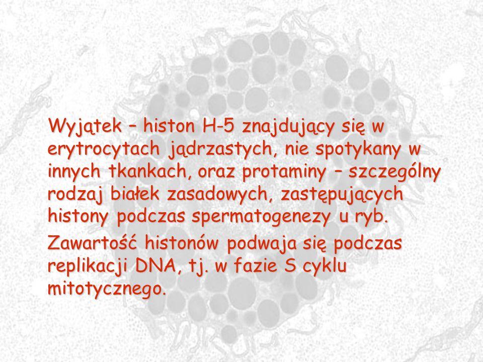 Wyjątek – histon H-5 znajdujący się w erytrocytach jądrzastych, nie spotykany w innych tkankach, oraz protaminy – szczególny rodzaj białek zasadowych,