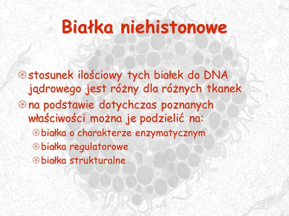 Białka niehistonowe stosunek ilościowy tych białek do DNA jądrowego jest różny dla różnych tkanek stosunek ilościowy tych białek do DNA jądrowego jest