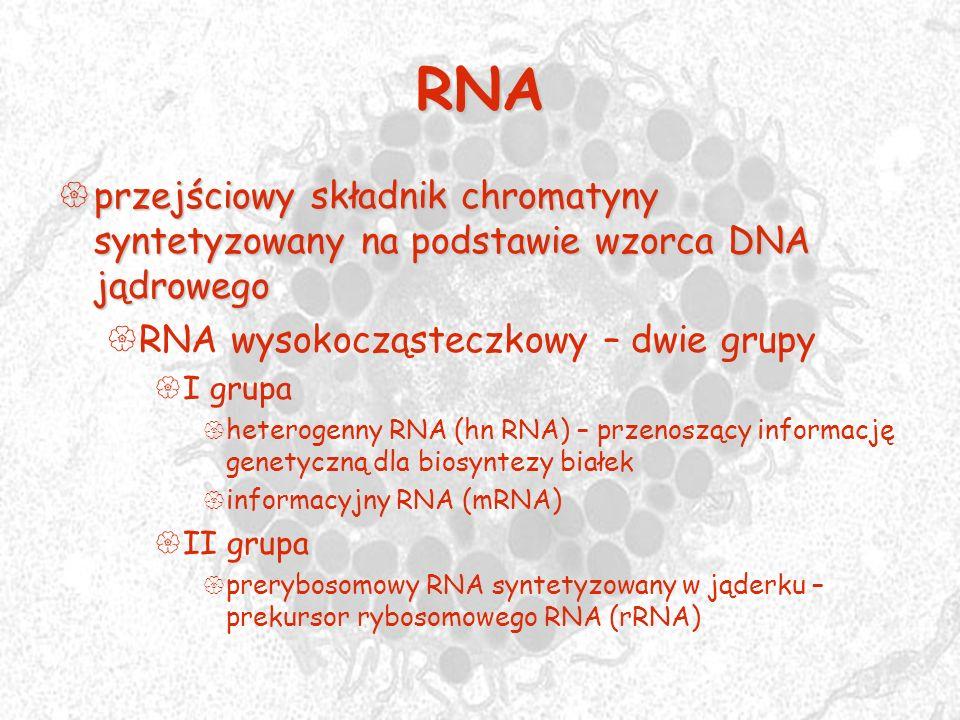 RNA przejściowy składnik chromatyny syntetyzowany na podstawie wzorca DNA jądrowego przejściowy składnik chromatyny syntetyzowany na podstawie wzorca