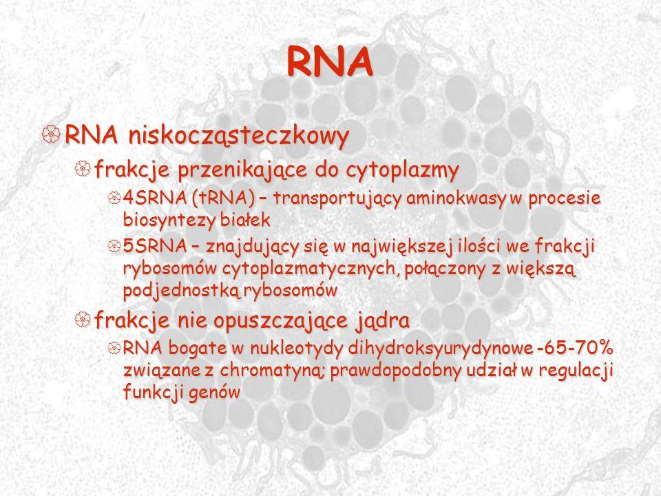 RNA RNA niskocząsteczkowy RNA niskocząsteczkowy frakcje przenikające do cytoplazmy frakcje przenikające do cytoplazmy 4SRNA (tRNA) – transportujący am