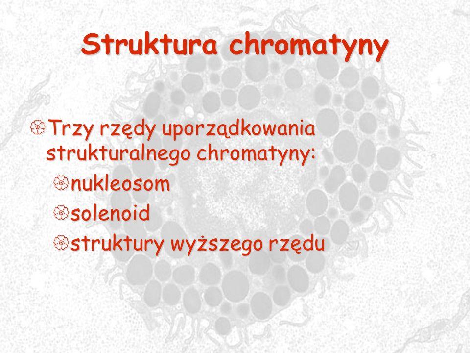 Struktura chromatyny Trzy rzędy uporządkowania strukturalnego chromatyny: Trzy rzędy uporządkowania strukturalnego chromatyny: nukleosom nukleosom sol