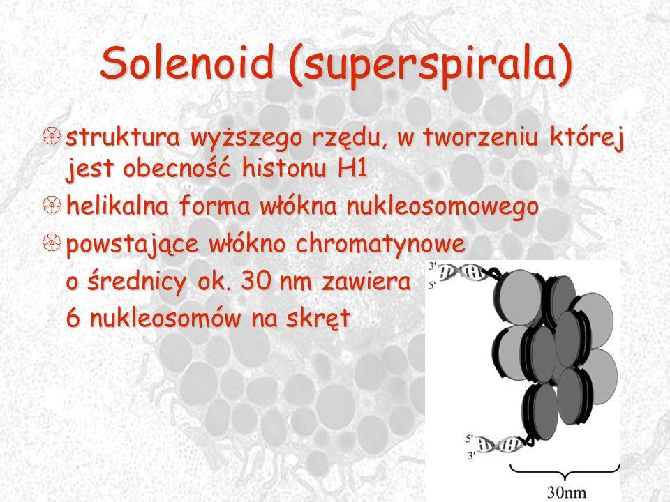 Solenoid (superspirala) struktura wyższego rzędu, w tworzeniu której jest obecność histonu H1 struktura wyższego rzędu, w tworzeniu której jest obecno