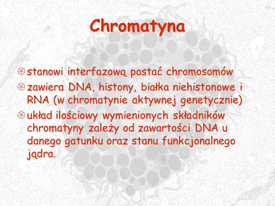 Chromatyna stanowi interfazową postać chromosomów stanowi interfazową postać chromosomów zawiera DNA, histony, białka niehistonowe i RNA (w chromatyni