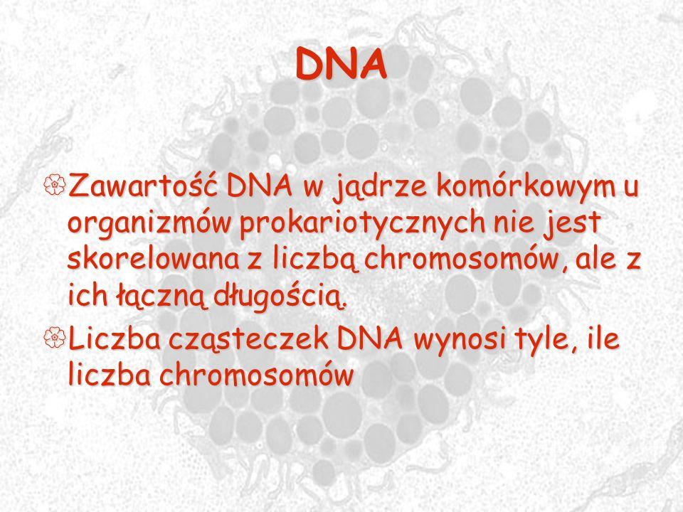 DNA Zawartość DNA w jądrze komórkowym u organizmów prokariotycznych nie jest skorelowana z liczbą chromosomów, ale z ich łączną długością. Zawartość D