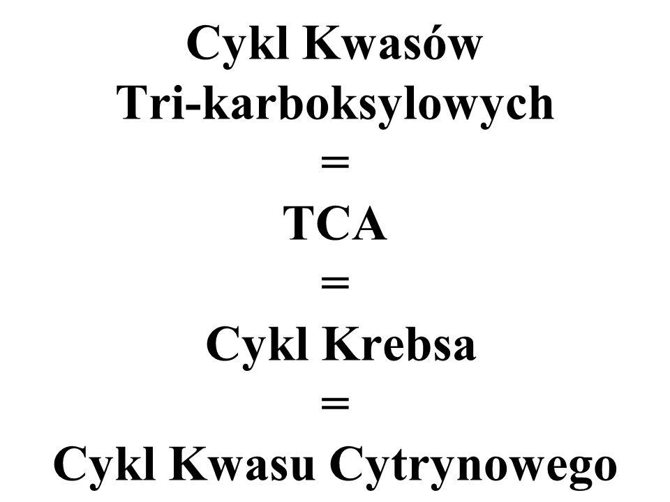 Cykl Kwasów Tri-karboksylowych = TCA = Cykl Krebsa = Cykl Kwasu Cytrynowego