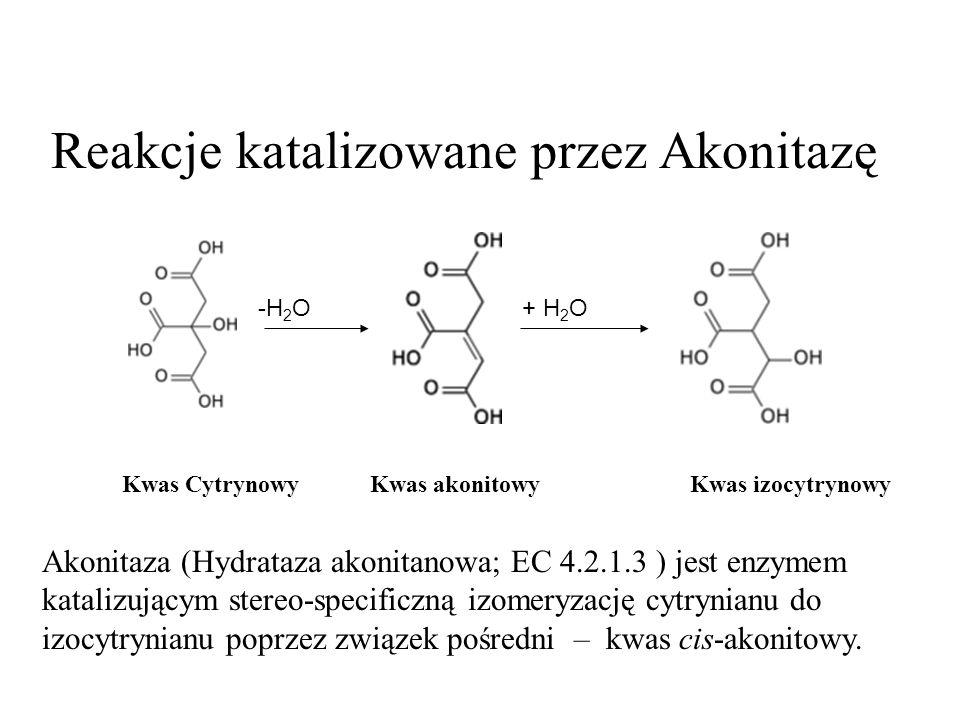 Reakcje katalizowane przez Akonitazę Kwas CytrynowyKwas akonitowy Kwas izocytrynowy Akonitaza (Hydrataza akonitanowa; EC 4.2.1.3 ) jest enzymem katalizującym stereo-specificzną izomeryzację cytrynianu do izocytrynianu poprzez związek pośredni – kwas cis-akonitowy.