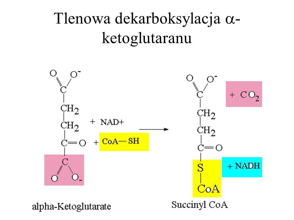 Tlenowa dekarboksylacja - ketoglutaranu