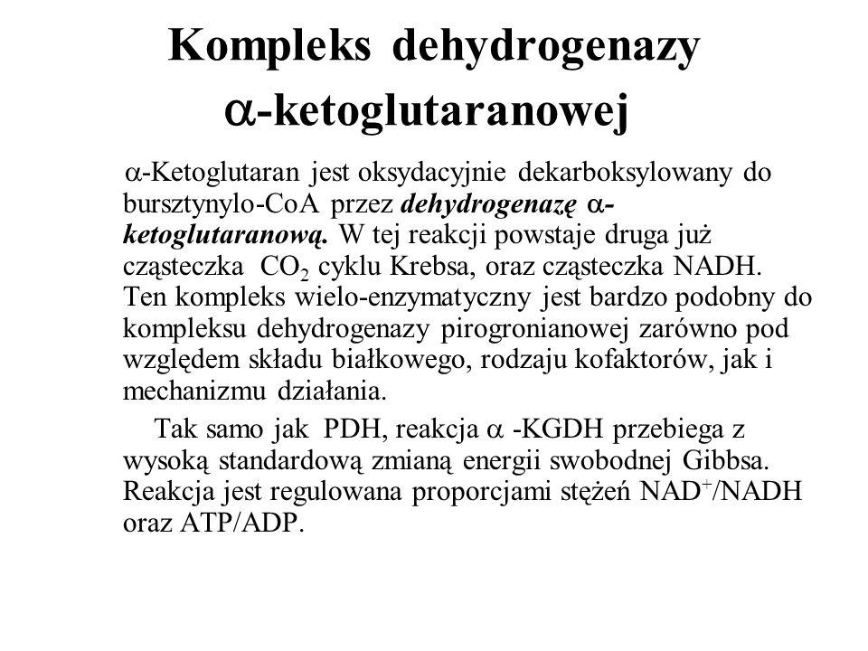 Kompleks dehydrogenazy -ketoglutaranowej -Ketoglutaran jest oksydacyjnie dekarboksylowany do bursztynylo-CoA przez dehydrogenazę - ketoglutaranową.