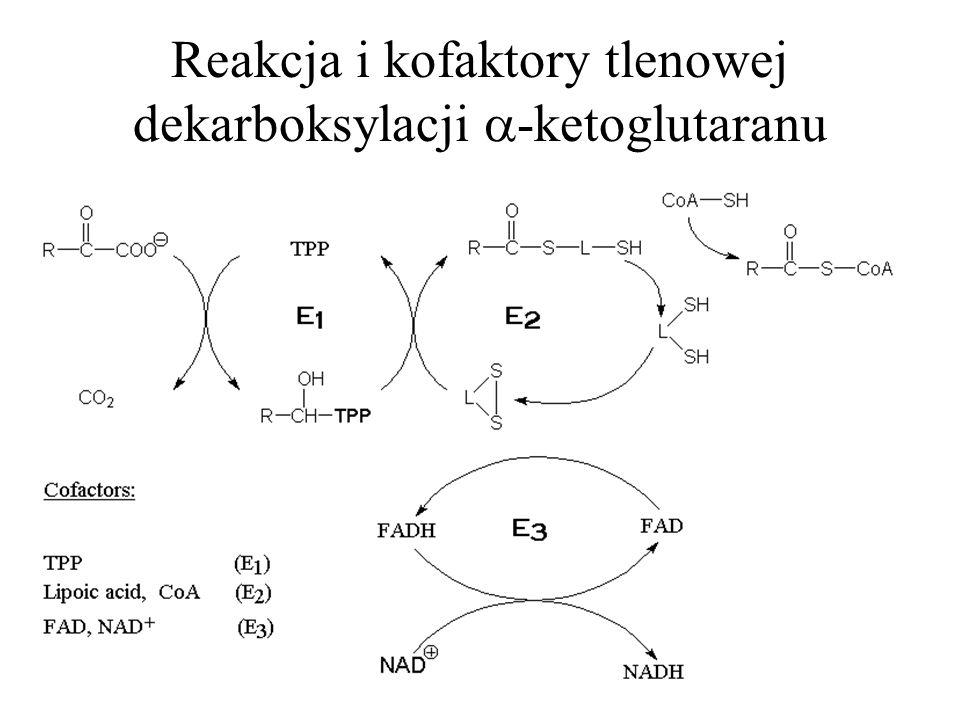 Reakcja i kofaktory tlenowej dekarboksylacji -ketoglutaranu