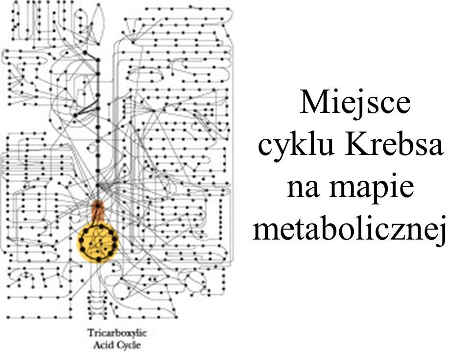 Miejsce cyklu Krebsa na mapie metabolicznej