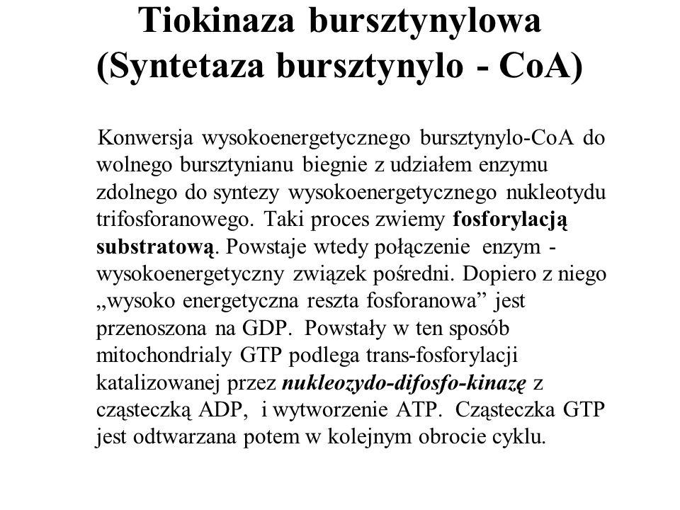 Tiokinaza bursztynylowa (Syntetaza bursztynylo - CoA) Konwersja wysokoenergetycznego bursztynylo-CoA do wolnego bursztynianu biegnie z udziałem enzymu zdolnego do syntezy wysokoenergetycznego nukleotydu trifosforanowego.