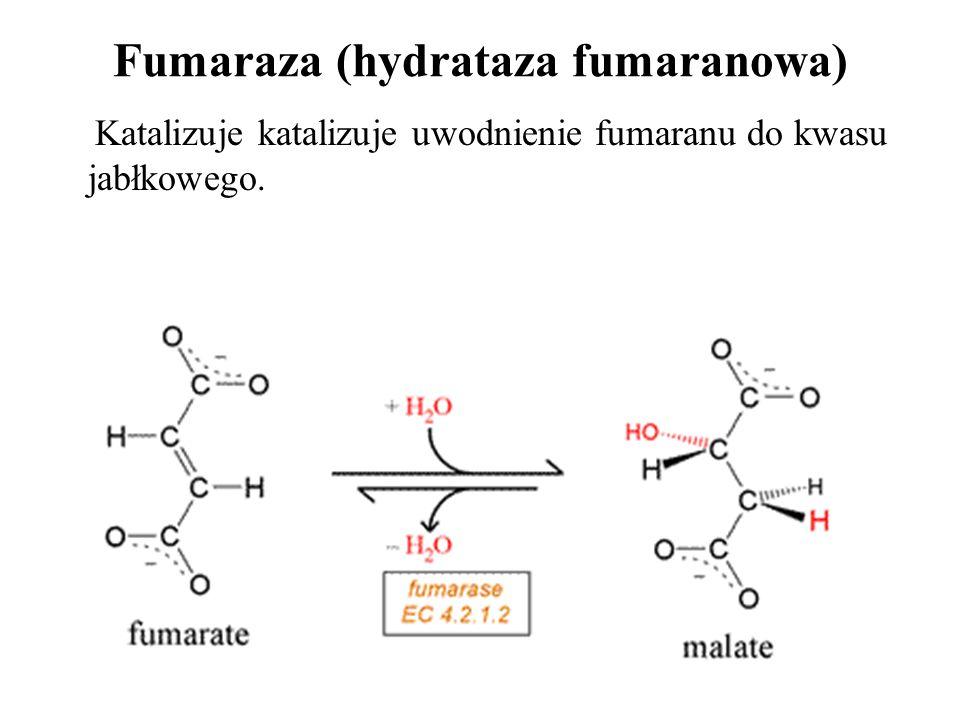 Fumaraza (hydrataza fumaranowa) Katalizuje katalizuje uwodnienie fumaranu do kwasu jabłkowego.