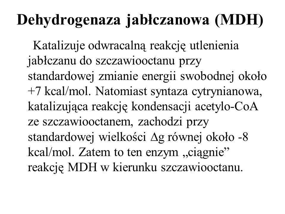 Dehydrogenaza jabłczanowa (MDH) Katalizuje odwracalną reakcję utlenienia jabłczanu do szczawiooctanu przy standardowej zmianie energii swobodnej około +7 kcal/mol.