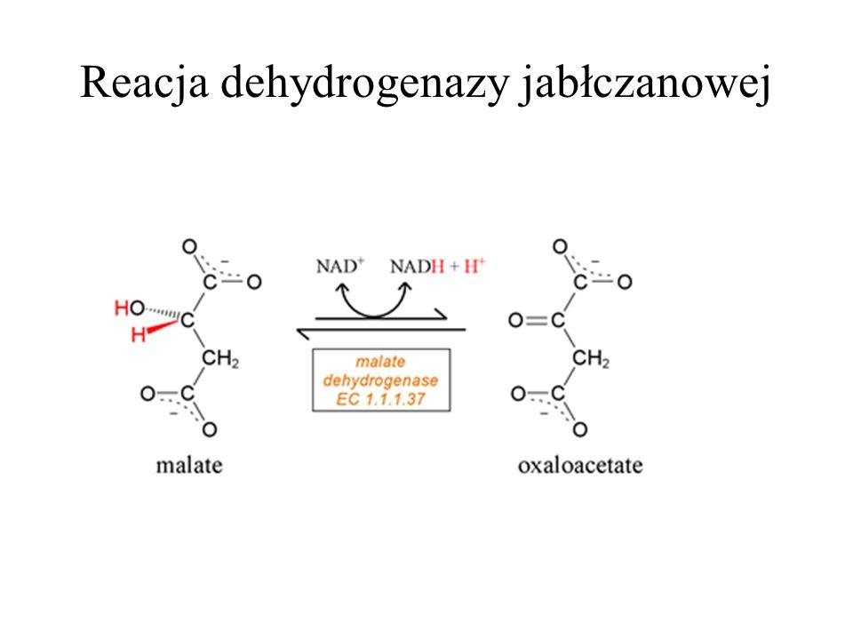 Reacja dehydrogenazy jabłczanowej