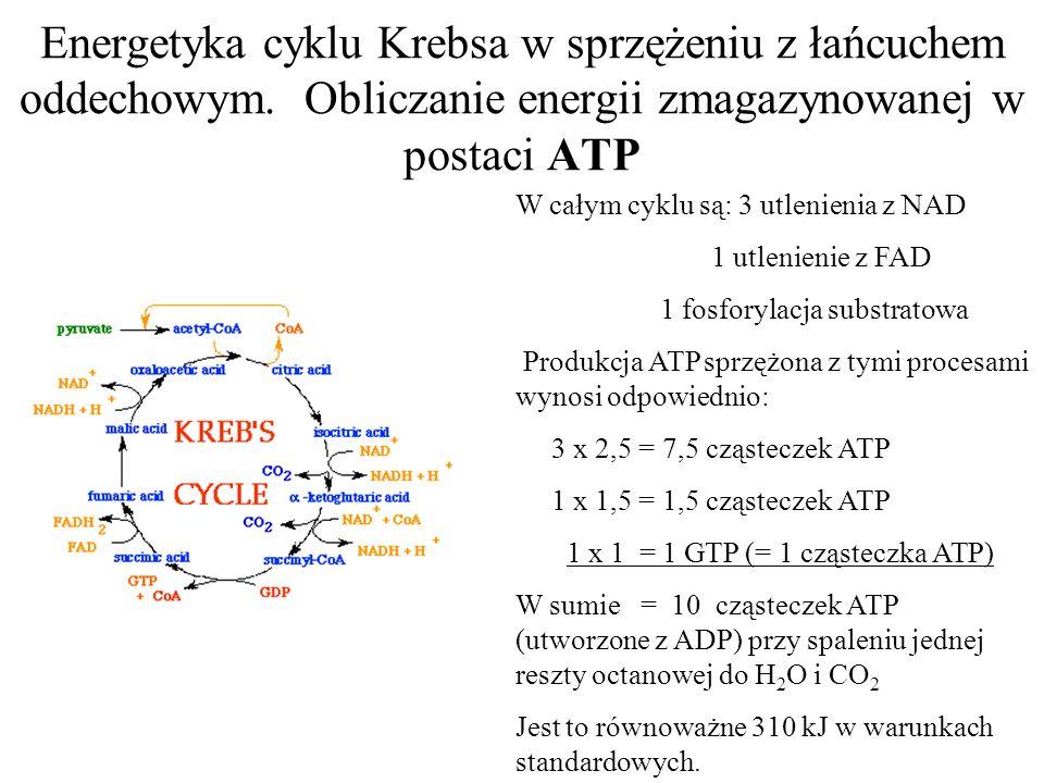 Energetyka cyklu Krebsa w sprzężeniu z łańcuchem oddechowym.