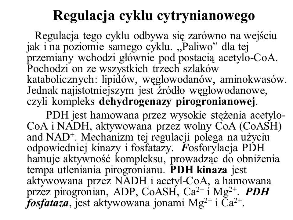 Regulacja cyklu cytrynianowego Regulacja tego cyklu odbywa się zarówno na wejściu jak i na poziomie samego cyklu.