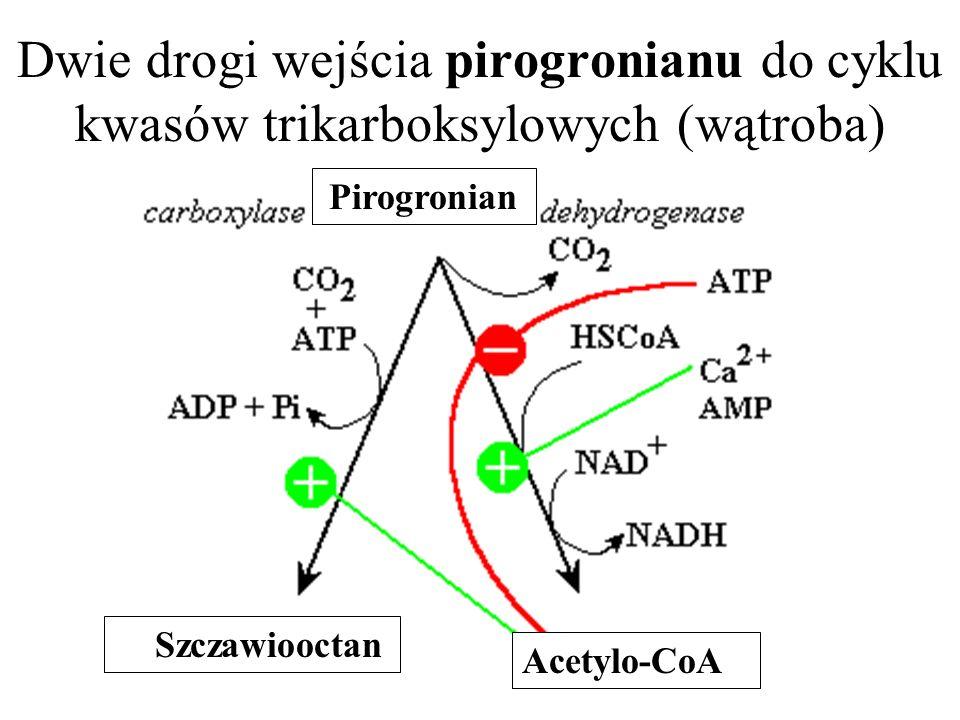 Dwie drogi wejścia pirogronianu do cyklu kwasów trikarboksylowych (wątroba) Pirogronian Szczawiooctan Acetylo-CoA