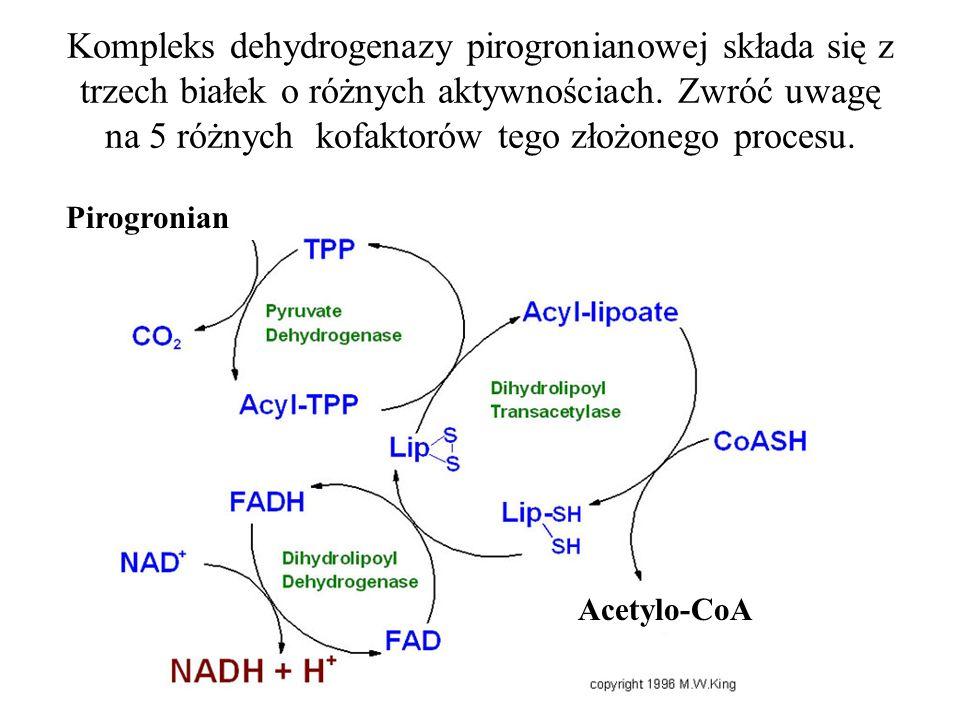 Kompleks dehydrogenazy pirogronianowej składa się z trzech białek o różnych aktywnościach.