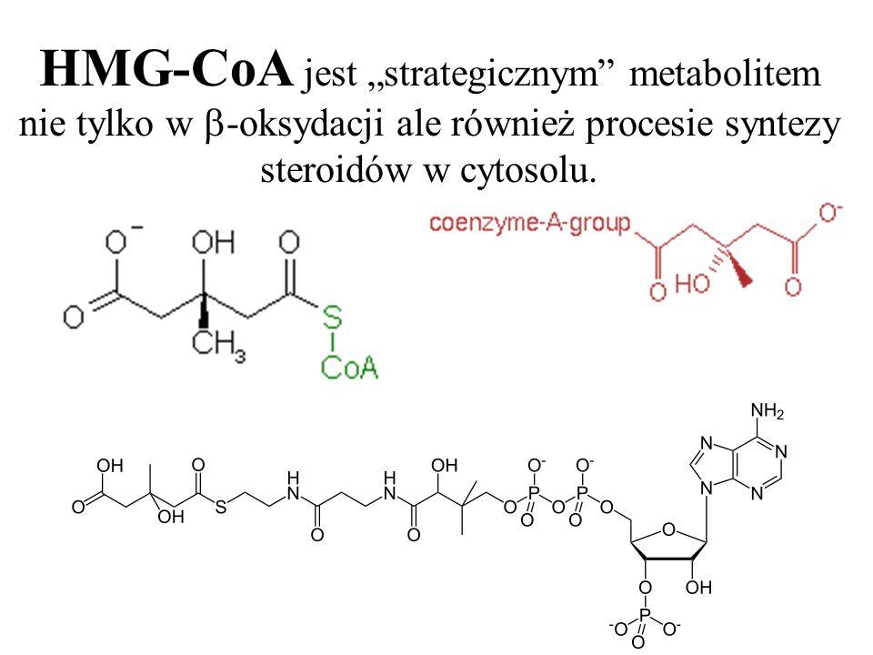 HMG-CoA jest strategicznym metabolitem nie tylko w -oksydacji ale również procesie syntezy steroidów w cytosolu.