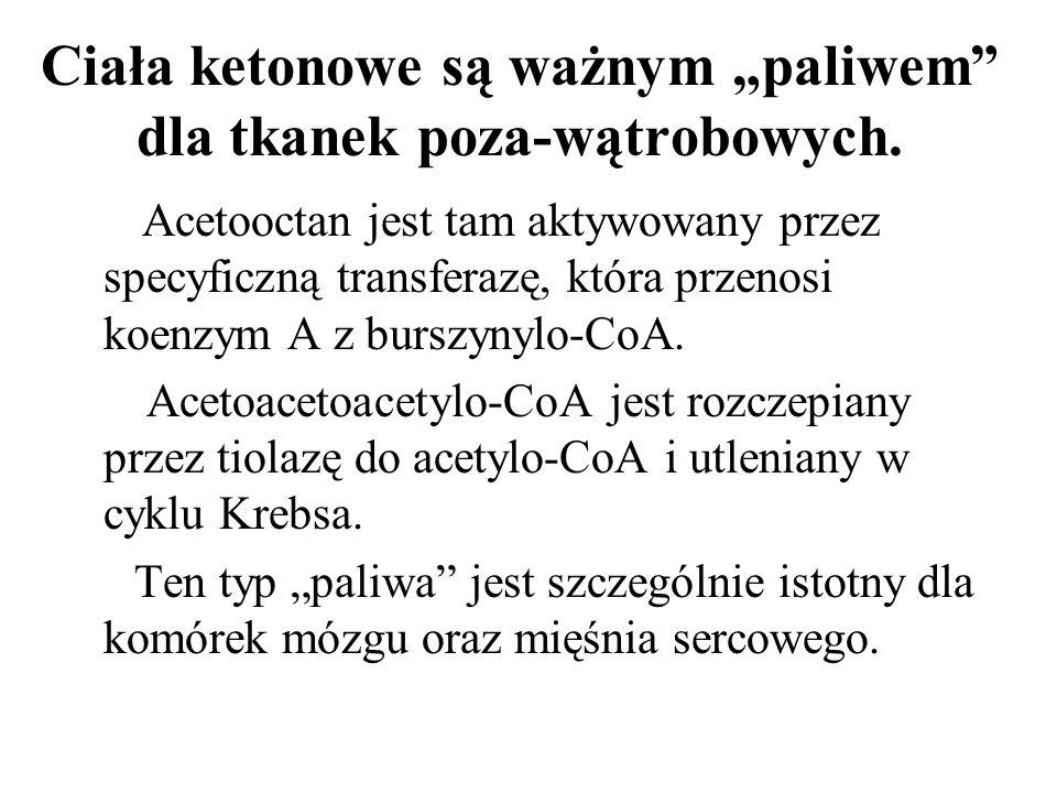 Ciała ketonowe są ważnym paliwem dla tkanek poza-wątrobowych. Acetooctan jest tam aktywowany przez specyficzną transferazę, która przenosi koenzym A z