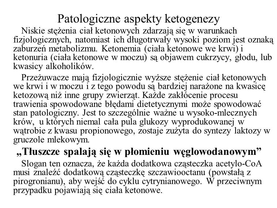 Patologiczne aspekty ketogenezy Niskie stężenia ciał ketonowych zdarzają się w warunkach fizjologicznych, natomiast ich długotrwały wysoki poziom jest