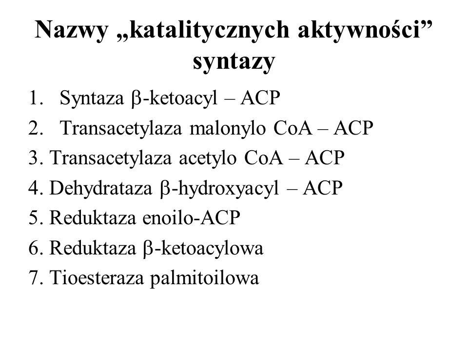 Nazwy katalitycznych aktywności syntazy 1.Syntaza -ketoacyl – ACP 2.Transacetylaza malonylo CoA – ACP 3. Transacetylaza acetylo CoA – ACP 4. Dehydrata