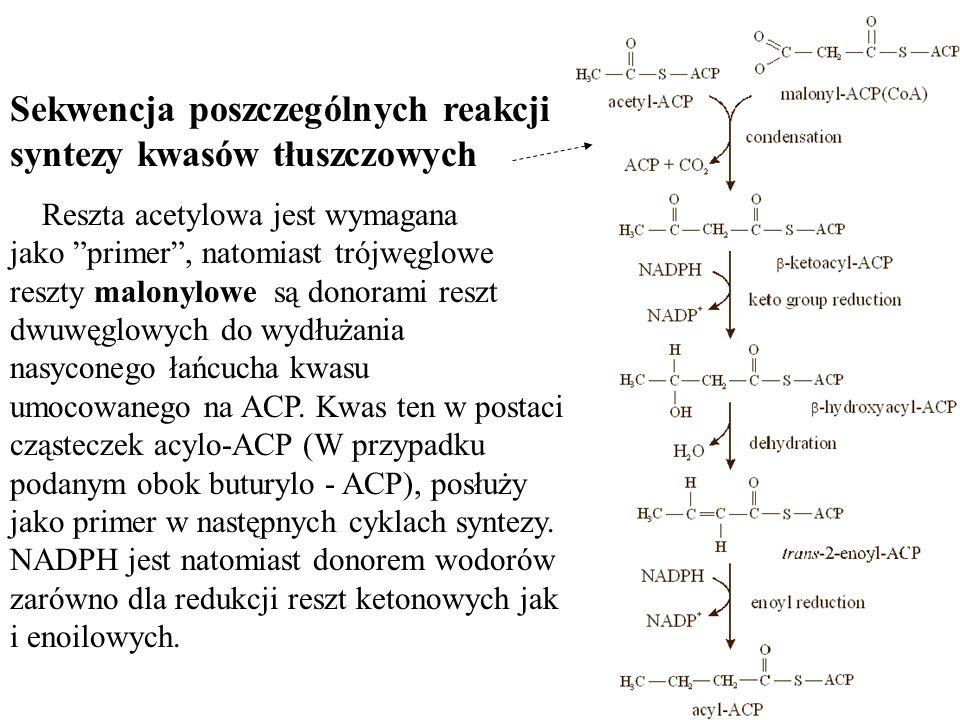 Sekwencja poszczególnych reakcji syntezy kwasów tłuszczowych Reszta acetylowa jest wymagana jako primer, natomiast trójwęglowe reszty malonylowe są do