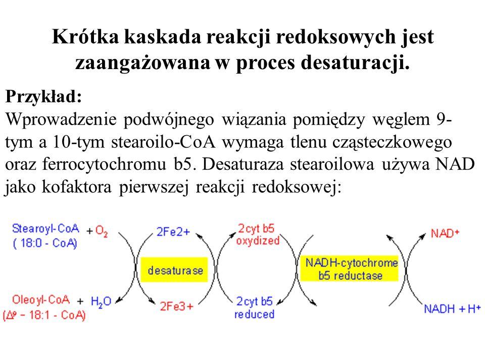 Przykład: Wprowadzenie podwójnego wiązania pomiędzy węglem 9- tym a 10-tym stearoilo-CoA wymaga tlenu cząsteczkowego oraz ferrocytochromu b5. Desatura