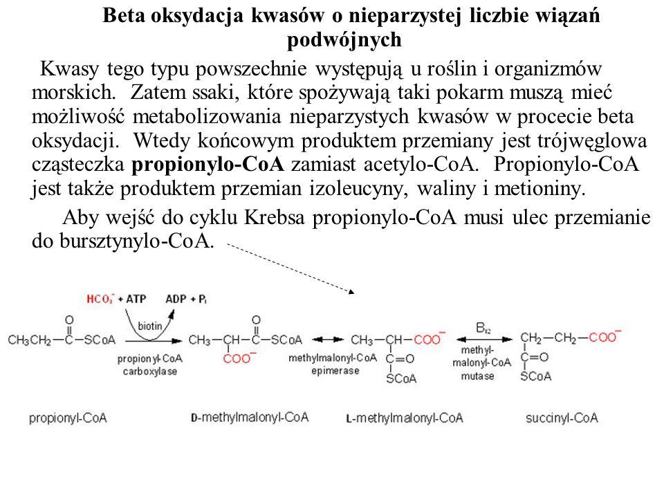 Beta oksydacja kwasów o nieparzystej liczbie wiązań podwójnych Kwasy tego typu powszechnie występują u roślin i organizmów morskich. Zatem ssaki, któr