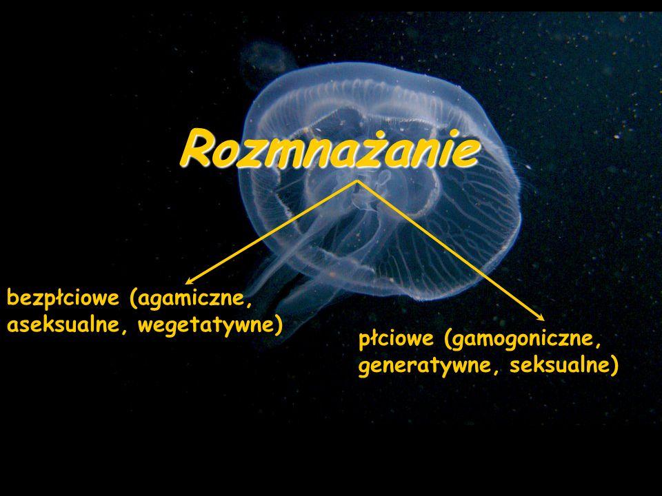 Rozmnażanie bezpłciowe (agamiczne, aseksualne, wegetatywne) płciowe (gamogoniczne, generatywne, seksualne)