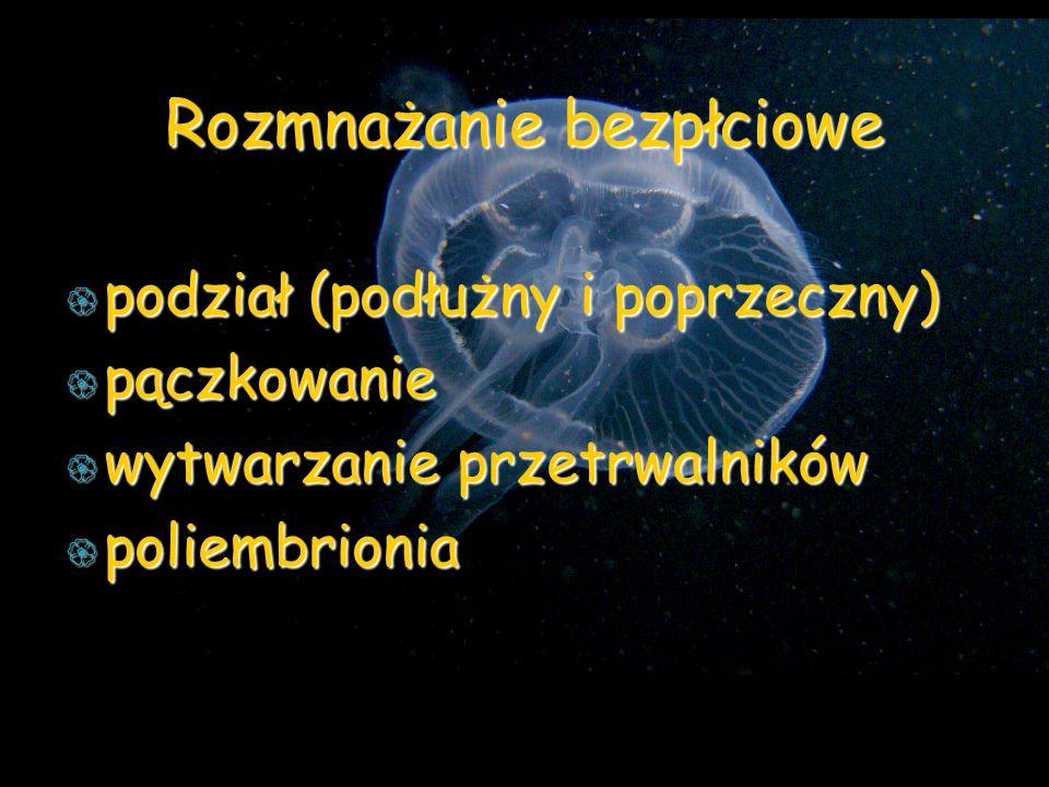 Rozmnażanie bezpłciowe podział (podłużny i poprzeczny) podział (podłużny i poprzeczny) pączkowanie pączkowanie wytwarzanie przetrwalników wytwarzanie przetrwalników poliembrionia poliembrionia