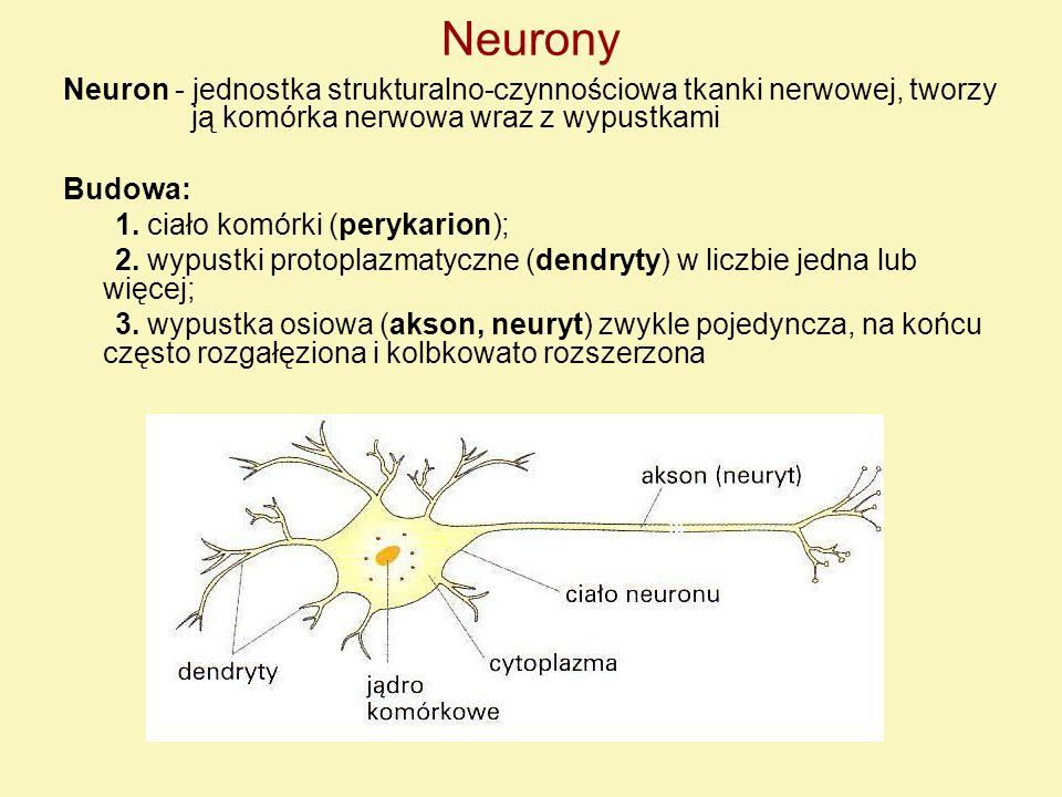 Neurony Neuron - jednostka strukturalno-czynnościowa tkanki nerwowej, tworzy ją komórka nerwowa wraz z wypustkami Budowa: 1. ciało komórki (perykarion