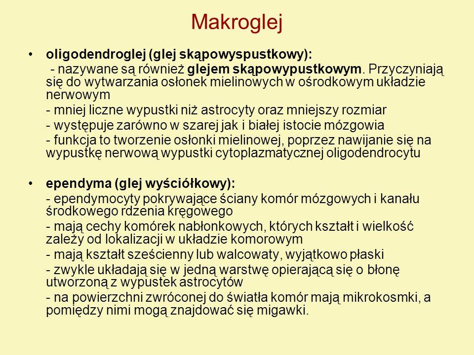 oligodendroglej (glej skąpowyspustkowy): - nazywane są również glejem skąpowypustkowym. Przyczyniają się do wytwarzania osłonek mielinowych w ośrodkow