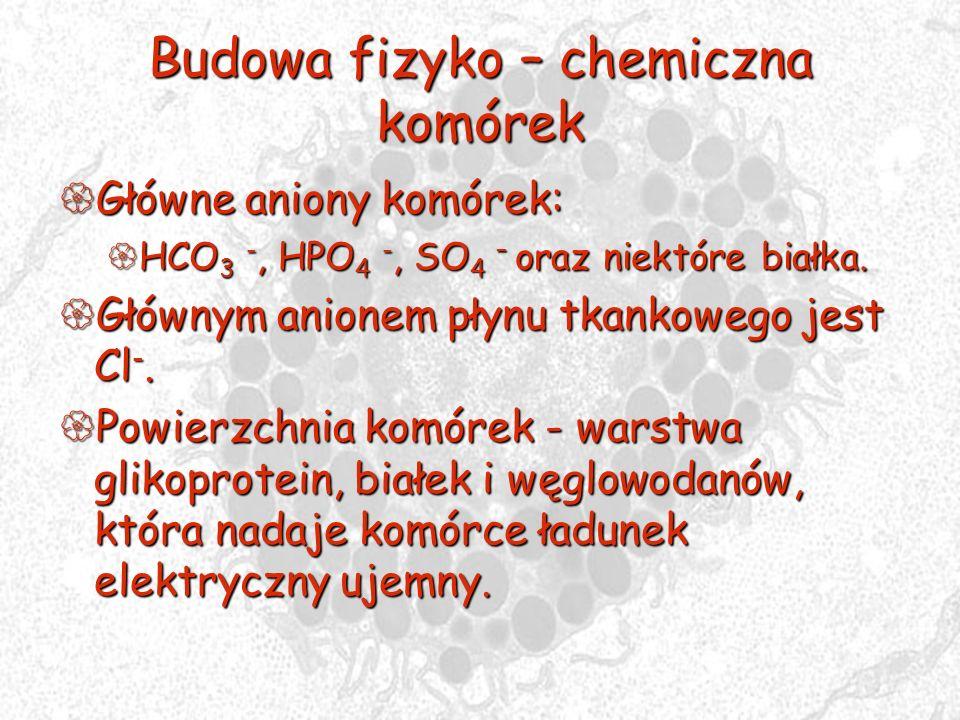 Budowa fizyko – chemiczna komórek Główne aniony komórek: Główne aniony komórek: HCO 3 -, HPO 4 -, SO 4 – oraz niektóre białka. HCO 3 -, HPO 4 -, SO 4