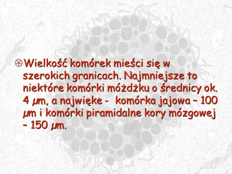 Wielkość komórek mieści się w szerokich granicach. Najmniejsze to niektóre komórki móżdżku o średnicy ok. 4 µm, a najwięke - komórka jajowa – 100 µm i