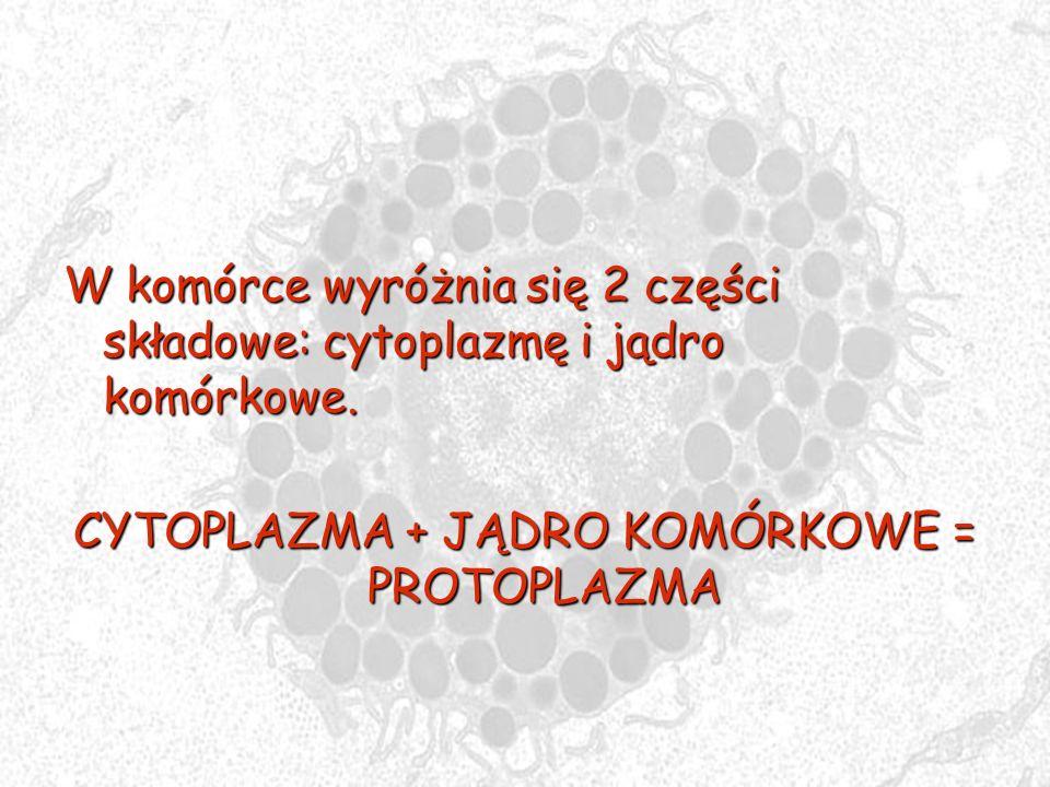 W komórce wyróżnia się 2 części składowe: cytoplazmę i jądro komórkowe. CYTOPLAZMA + JĄDRO KOMÓRKOWE = PROTOPLAZMA
