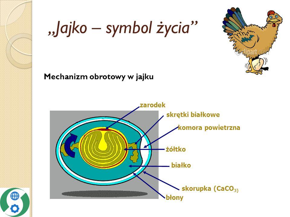 Jajko – symbol życia skrętki białkowe zarodek białko żółtko komora powietrzna błony skorupka (CaCO 3) Mechanizm obrotowy w jajku