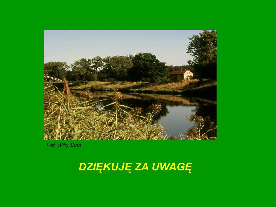 DZIĘKUJĘ ZA UWAGĘ Fot. Willy Sinn