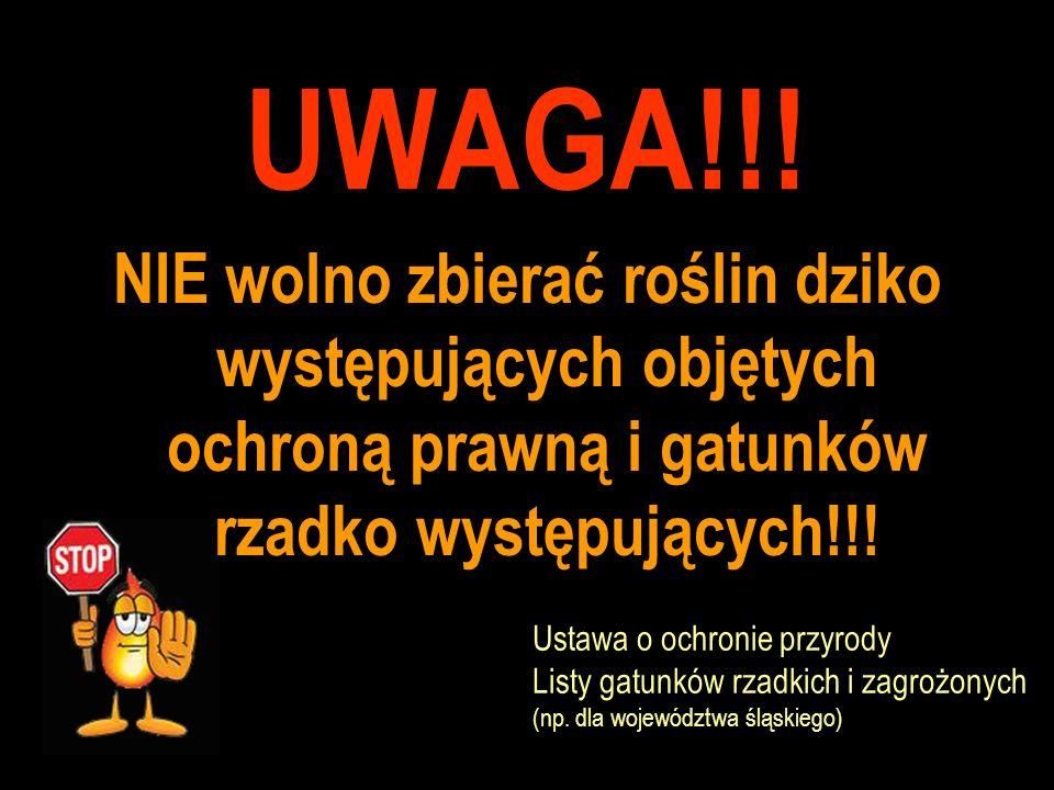 UWAGA!!! NIE wolno zbierać roślin dziko występujących objętych ochroną prawną i gatunków rzadko występujących!!! Ustawa o ochronie przyrody Listy gatu