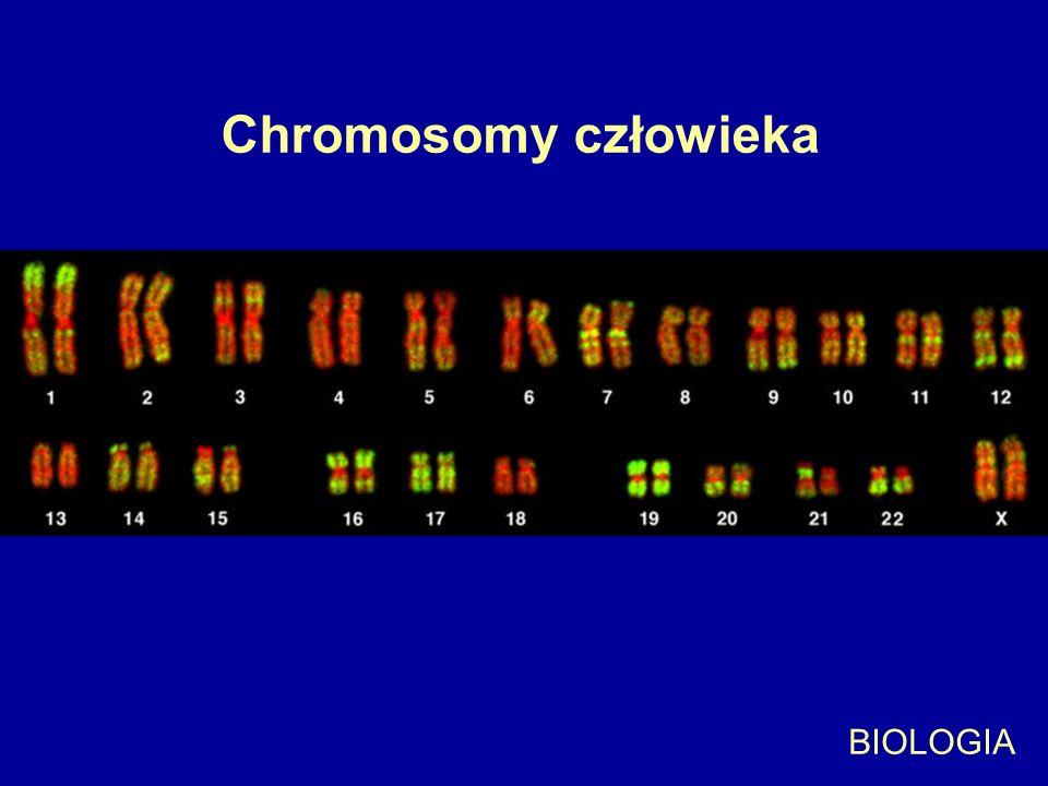 Chromosomy człowieka BIOLOGIA