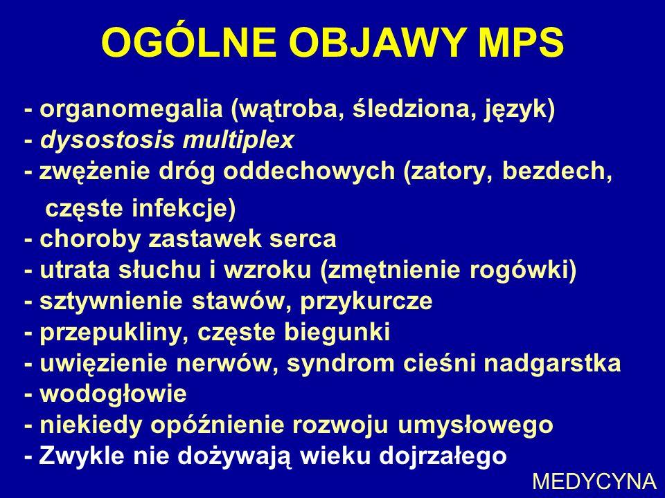 OGÓLNE OBJAWY MPS - organomegalia (wątroba, śledziona, język) - dysostosis multiplex - zwężenie dróg oddechowych (zatory, bezdech, częste infekcje) -