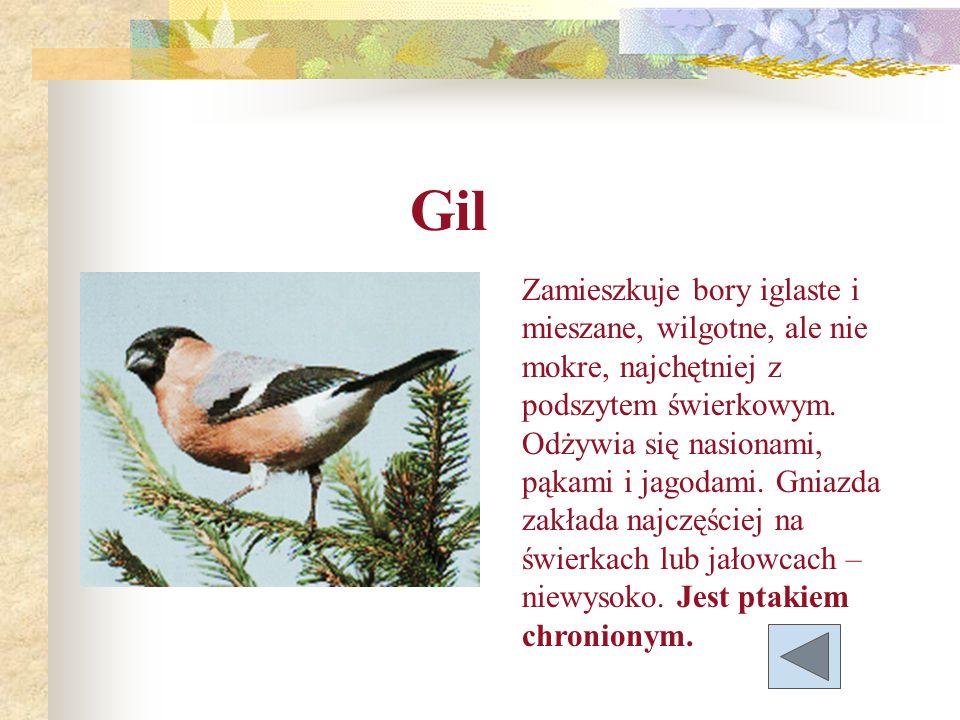 Gil Zamieszkuje bory iglaste i mieszane, wilgotne, ale nie mokre, najchętniej z podszytem świerkowym. Odżywia się nasionami, pąkami i jagodami. Gniazd