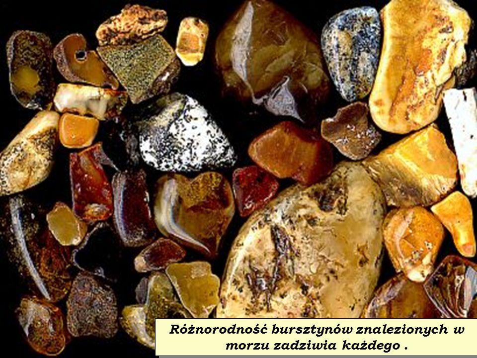 Bursztyn (dawniej zwany jantarem) to zastygła żywica drzew iglastych sprzed milionów lat.