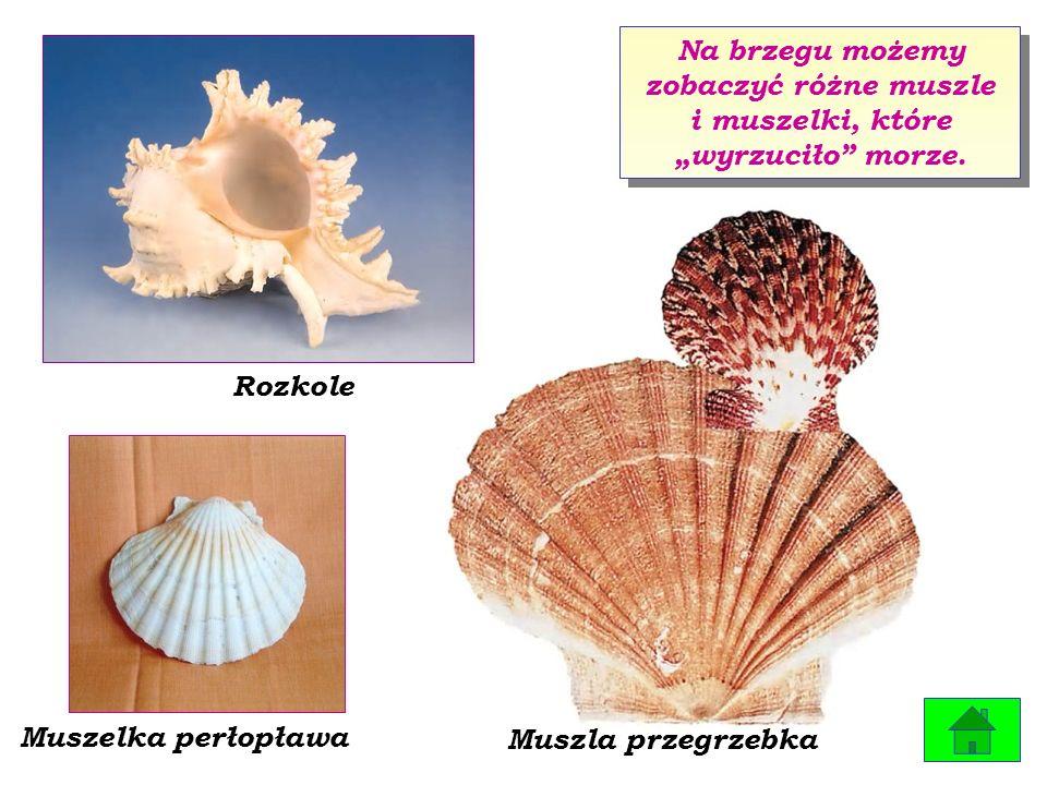 Różnorodność bursztynów znalezionych w morzu zadziwia każdego.
