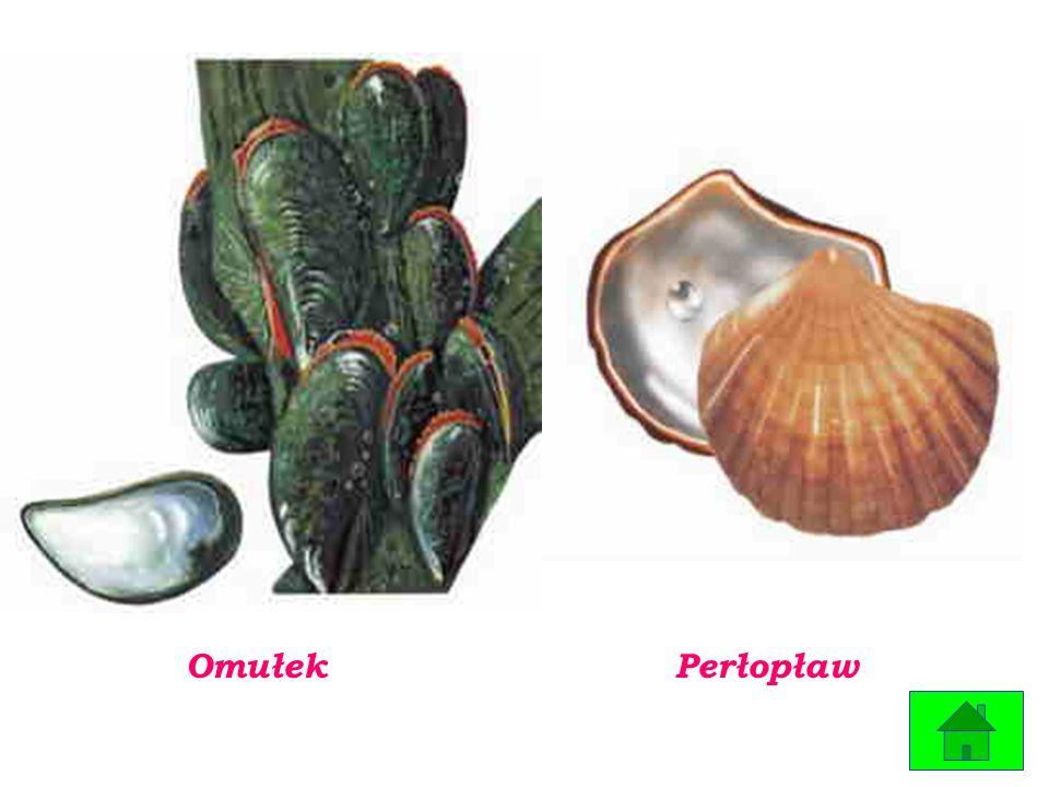 Zwierzęta zamieszkujące Bałtyk to przede wszystkim ryby oraz maleńkie organizmy wchodzące w skład planktonu.rybyplanktonu.